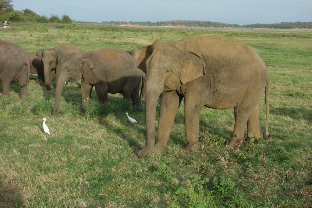 象のサファリ